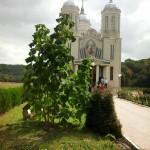 Paulownia Manastirea Sf. Andrei jud. Constanta -1